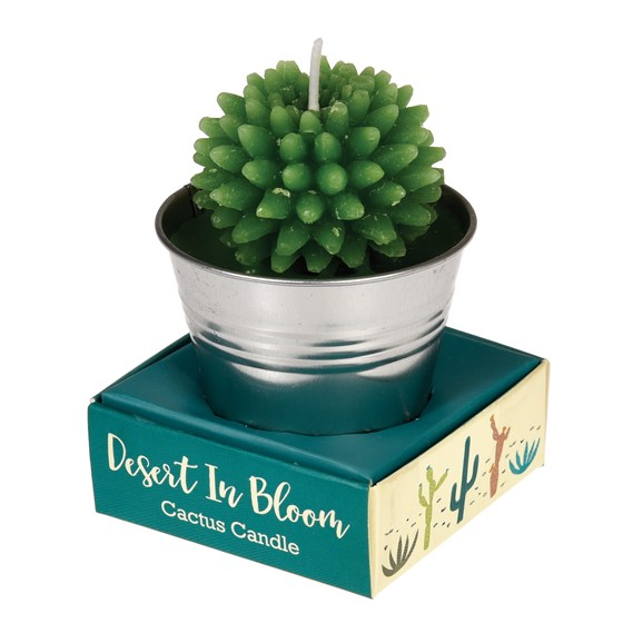 cactus candle in tin