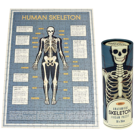anatomical skeleton puzzle in a tube